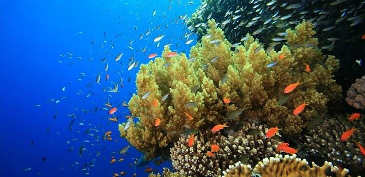 underwater-barbados